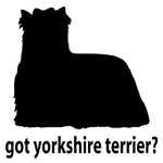 Got Yorkshire Terrier?