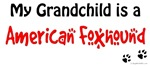 American Foxhound Grandchild