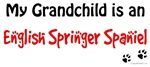 En Springer Grandchild