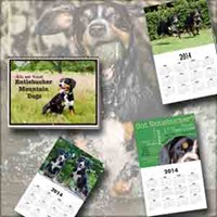 Entlebucher Mountain Dog Calendars