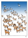 Reindeer Herd Cards