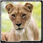 Lions Stuff