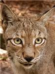 Siberian Lynx Short-Sleeved Shirts