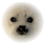Baby Seal Cub Gifts