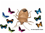 Stink Bug Butterfly