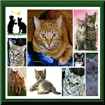 Cat Lovers T-shirts and Gifts