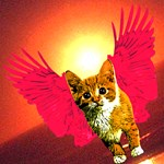 Red Wing Cat