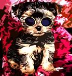 Little Dog Luck