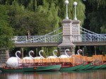 Lagoon Bridge and Swan Boat Rides -Celeste Sheffey