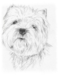 West Highland Terrier