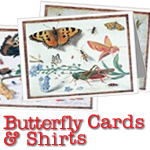 Butterfly Greeting Cards & Shirts