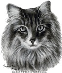 Gray Long-Haired Domestic Cat