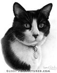 Black & White Tuxedo Cat
