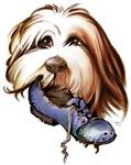 Bearded Collie, cartoon