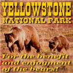 Yellowstone NP For The Bears