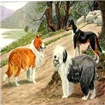 Sheep Dog & Collie 1920 Digitally Remastered