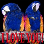 Two Parrots I Love You Golden Wings