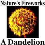 Nature's Fireworks: A Dandelion