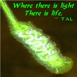 Where There Is Light There Is Life