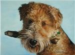 Wire Terrier
