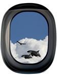 Whales in Flight
