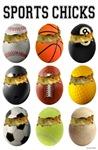 Sports Chicks