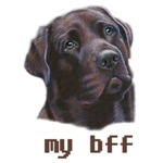 my bff Chocolate Labrador Retriever