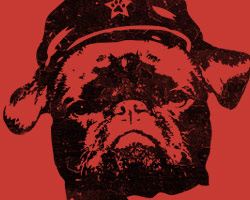Big Brother - Black Pug