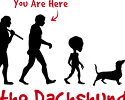 Dachshund Evolution