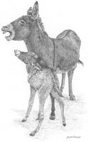 Donkeys & Mules!