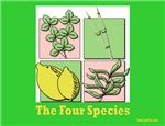 Succos The Four Species