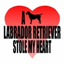 A Labrador Retriever Stole My Heart