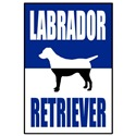 Classic Blue Labrador Retriever