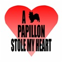 A Papillon Stole My Heart