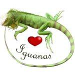 Love Iguanas
