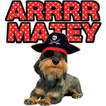 Pirate Wirehaired Dachshund