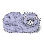 Lilac Persian Cat