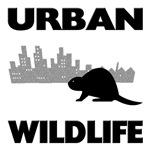 Urban Wildlife - Beaver