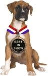 Best In Show Boxer