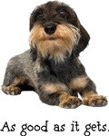 Good Wirehaired Dachshund