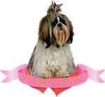 Shih Tzu T-Shirt - Valentines Day
