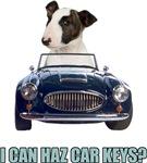 LOL Bull Terrier