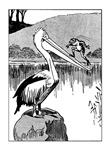 Pelican Greeting Cards