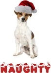 Naughty Jack Russell Terrier