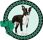 Irish Boston Terrier