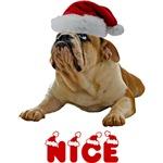 Nice Bulldog