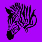 Purple Zebra
