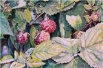 Rasselberry