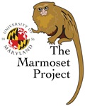 Marmoset Project