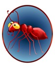 Red Ant Circle